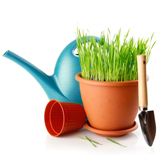 Pflanzen & Bewässerung